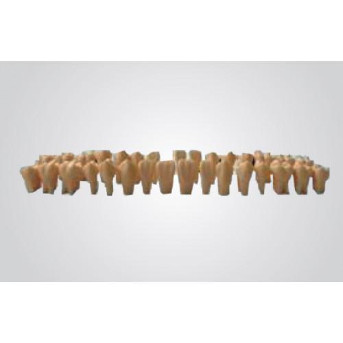 Змінні зуби з отвором для зубних моделей (28 шт.)